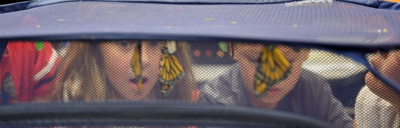 A blonde girl and brown-haired bow watching butterflies leave the chrysalis